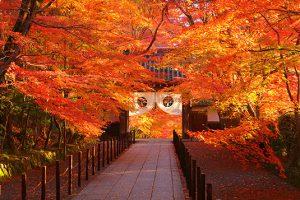 ホテルディスカバー京都長岡京でのおすすめの過ごし方【観光編】